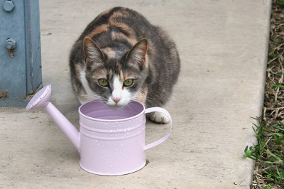 Twursula drinking from Amara's watering can