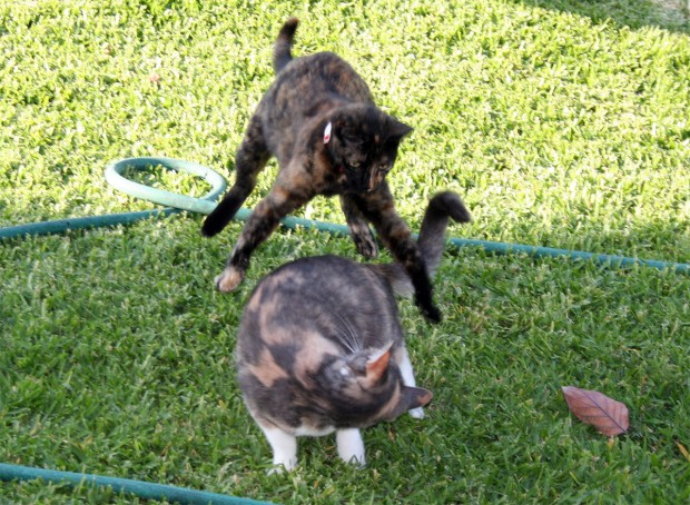 Twiggy and Twursula play Leap Frog