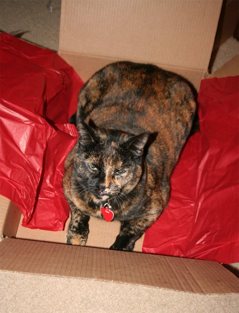 Twiggy in her Christmas Box